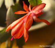 300-bloomiing-cactus-02222019_108