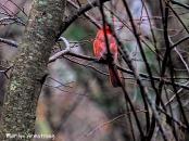 300-cardinarl-woods-second-tues-birds-02122019_022