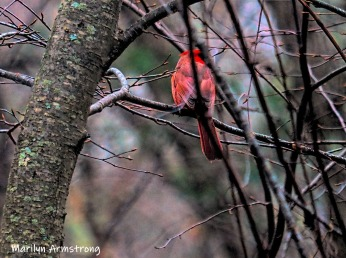300-cardinarl-woods-second-tues-birds-02122019_022
