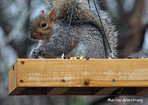 Early morning squirrel