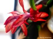 300-full-more-blooming-cactus-02232019_002