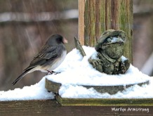 300-junco-frog-late-snowy-second-tuesday-birds-1-02122019_311