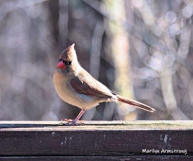 Pointy on top, pointy beak