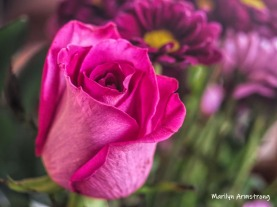 Beautiful pink rose in a beautiful bouquet