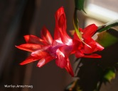 300-second-blooming-cactus-02262019_001.