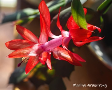 300-second-blooming-cactus-02262019_010