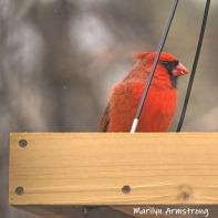300-square-cardinal-final-tuesday-birds-01292019_110