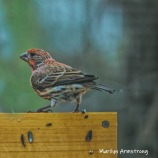 300-square-which-finch-rain-and-birds-02242019_018