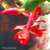 300-square-second-blooming-cactus-02282019_014