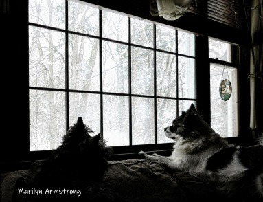 Dogs on the sofa, gazing on snow