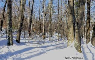 180-Side-Woods-Snow-pix-GA-03052019_015