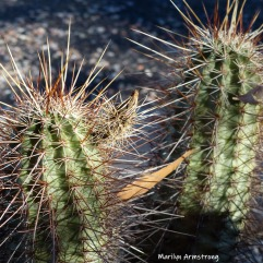 Prickly (and then some!)