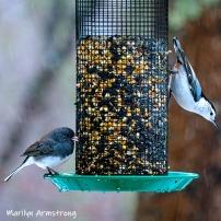 300-junco-nuthatch-second-sunday-birds-03102019_01