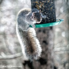 300-square-hungry-squirrel-03052019_221