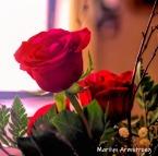 300-square-no-reason-roses-03232019_029