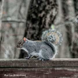 Squirrel on the rail