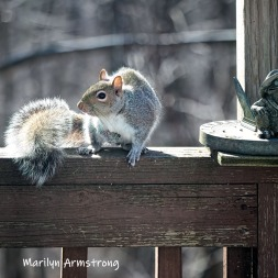 300-square-young-squirrel-03272019_118