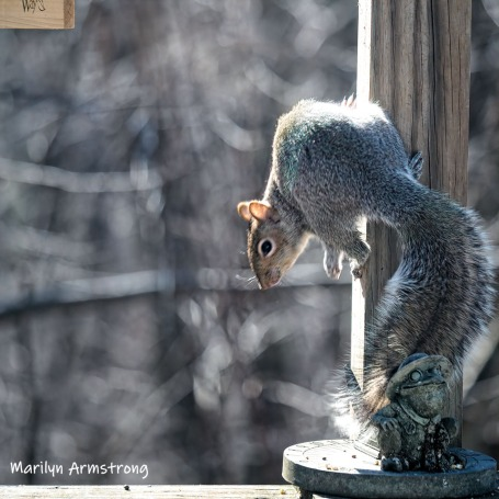300-square-young-squirrel-03272019_121