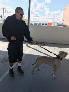 Newly rescued dog with new owner