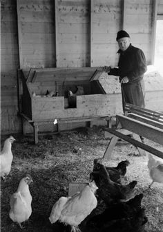 Cagney with chickens on Vineyard (small)