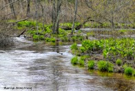 180-Green-Islands-in-the-River-Rhode-Island-Mar-04252019_069
