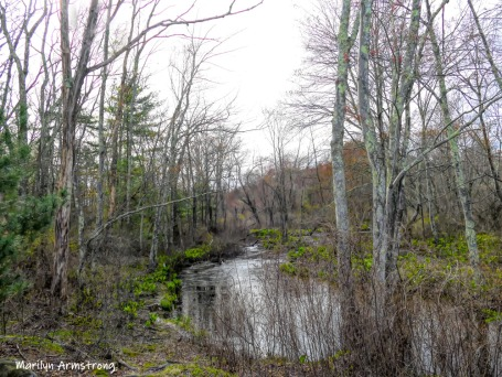 180-Little-River-Rhode-Island-Mar-04252019_084