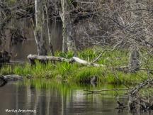 180-River-Island-Rhode-Island-Mar-04252019_013