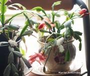 300-new-pink-cactus-04052019_007