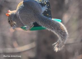 300-new-squirrel-sunny-day-birds-04042019_016