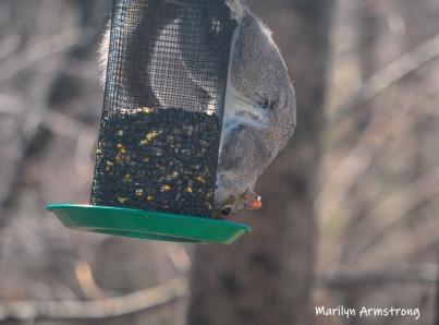 300-new-squirrel-sunny-day-birds-04042019_026
