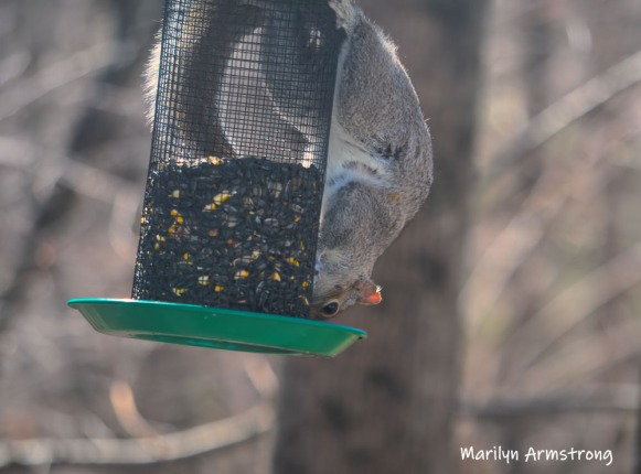 300-new-squirrel-sunny-day-birds-04042019_026