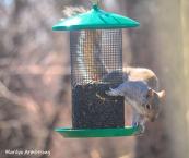 300-new-squirrel-sunny-day-birds-04042019_034