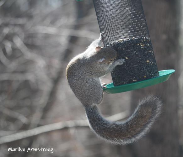 300-new-squirrel-sunny-day-birds-04042019_036