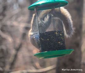 300-new-squirrel-upside-down-sunny-day-birds-04042019_031