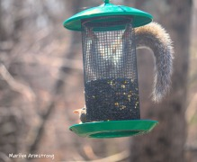 300-new-upside-down-squirrel-sunny-day-birds-04042019_030
