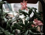 300-pink-cactus-newer-04082019_206