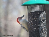 300-red-bellied-woodpecker-04162019_001