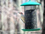 300-red-bellied-woodpecker-04162019_022