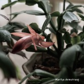 300-square-new-pink-cactus-04052019_009