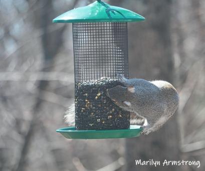 300-squirrel-sunny-day-birds-04042019_009
