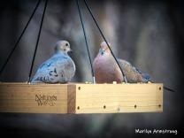 Ah, romance ... Doves
