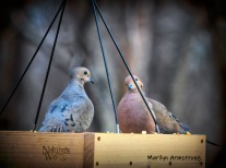 Two well-fed doves