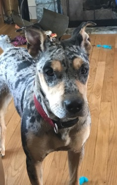 Houla at 14 months