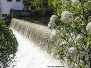 180-Flowers-and-Falls-Mumford-May-Mar-05072019_089