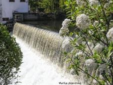 180-Flowers-and-Falls-Mumford-May-Mar-05072019_089