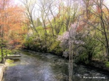 Spring along the river