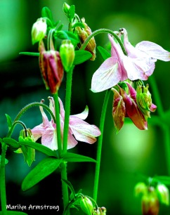 180-Vertical-Columbine-05252019_009