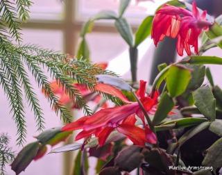 240-macro-red-cactus-05182019_042