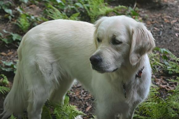 Ava, nearly white