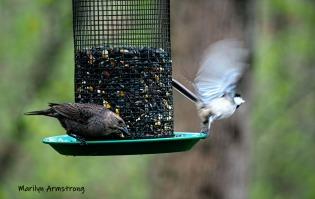 300-flying-birds-backyard-spring-05042019_032